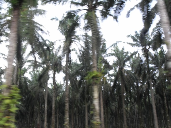 Km and Km of Palm Trees