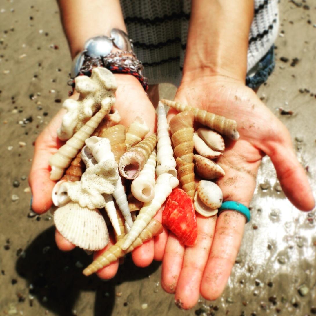 Beautiful shells in Playa Guiones, Nosara, Pacific Coast, Costa Rica