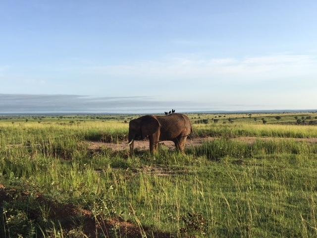 Uganda Safari, Murchinson Falls National Park
